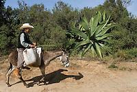 Don Federico Rodriguez Parada rides his donkey to his Tinacal in San Jose Buenavista. Pulque route Tlaxcala, Mexico June 6, 2007