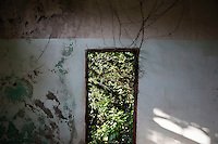 Vegetation from outside grows through open doors of a house at the abandoned fishing village of Hautouwan on the island of Shengshan July 26, 2015. Every day hundreds of tourists make their way on narrow footpaths between some of 500 houses covered by bewildered vegetation at Hautouwan, once home to over 2000 fishermen. The fishing village, a part of the Shengsi archipelago east of Shanghai was abandoned in early 90s and now only less than a half dozen people live there. REUTERS\Damir Sagolj