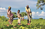 A family joins in hoeing on their farm in Baula, Malawi, where they have benefited from a Presbyterian Church-sponsored Soils, Foods and Healthy Communities Project