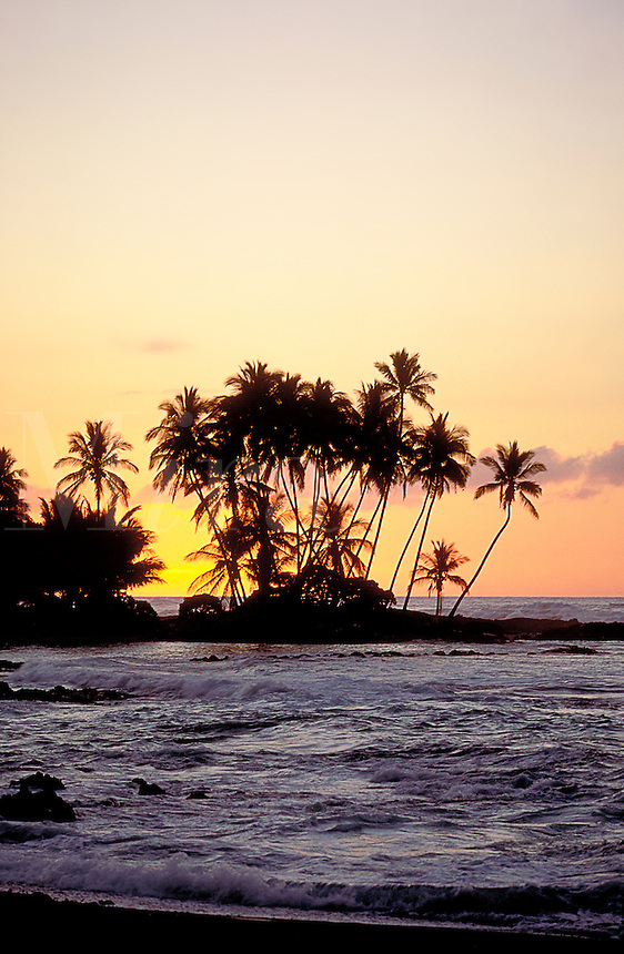 Palm trees by the beach in the sunset