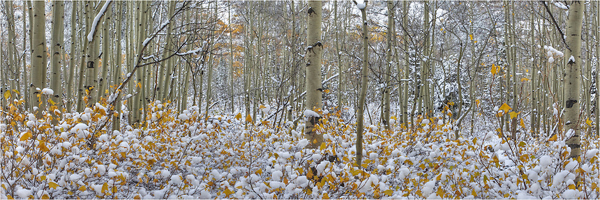 After a morning of photographing the Maroon Bells in Autumn, the snows began to fall. I captured this Maroon Bells image - actually a panorama from Colorado's most photographed area - stitching two images together. Soon after, it was a whiteout!