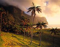 Kentia Palms & Mts. Gower & Lidgbird, Lord Howe Island, New South Wales, Australia   UNESCO World Heritage Site