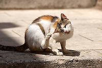 Stock photos of Street cat scratching itself - Dubrovnik - Croatia