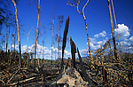 Brazil Amazon Slash & burn agriculture landscapes