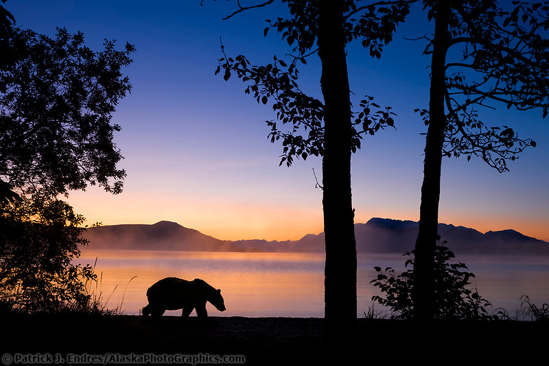DIGITAL COMPOSITE: Brown bear walks along the shores of Naknek lake at dawn, Kejulik mountains, Katmai National Park, Alaska.