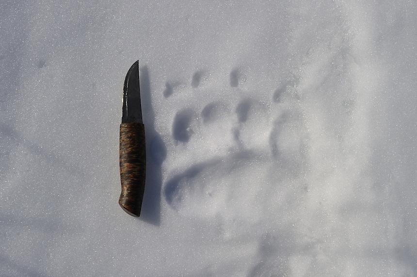 Bear track,Sarek,Sweden