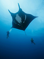 QT2074-D. Manta Ray (Manta birostris) interacts with scuba divers. Baja, Mexico, Pacific Ocean.<br /> Photo Copyright &copy; Brandon Cole. All rights reserved worldwide.  www.brandoncole.com