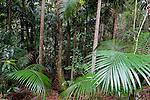 Katandra Rainforest