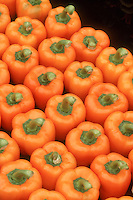 Rows of orange bell peppers vegetables harvested and ready to eat, full of carotene and antioxidants, a healthy fresh food from the garden