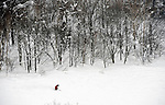 A skier descends on a run at Grand Hirafu resort in the Niseko ski region of Hokkaido, Japan on Feb. 9 2010. Niseko is made up of 57 runs  totaling over 47 km in groomed slopes and is the only resort area in Japan where off-piste skiing and boarding is legal.
