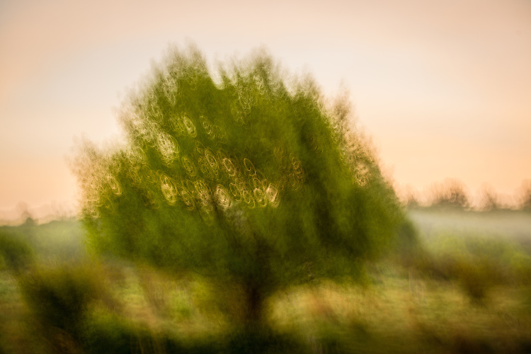 Impressionist Tree, early morning, New Zealand
