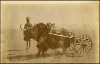 BNPS.co.uk (01202 558833)<br /> Pic: HAldridge/BNPS<br /> <br /> ***Please Use Full Byline***<br /> <br /> Yak carts on the tibetan plateau.<br /> <br /> The vendor also had a series of old pictures from the controversial Younghusband expedition.<br /> <br /> A man who took an old silver teapot along to TV's Flog It is celebrating today after it led to a record 140,000 pounds sale.<br /> <br /> Experts on the BBC show valued the item, that originated from the Far East, at 120 pounds, prompting the owner to reveal he had five other heirlooms at home.<br /> <br /> After digging the relics out he sold them at auction for the six figure sum, setting a record for the highest amount ever achieved on the popular programme.<br /> <br /> The show is very much like the Antiques Roadshow except that people go on to sell their treasures at auction which is also filmed by the Beeb.<br /> <br /> The unnamed owner took the 12ins tall teapot along to a valuation day held last month at Longleat House, Wilts.