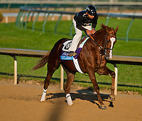 Dullahan, trained by Dale Romans and to be ridden by Julien Leparoux exercises in preparation for the 2011 Breeders' Cup at Churchill Downs on November 1, 2011.
