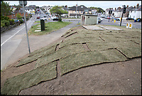 BNPS.co.uk (01202 558833)<br /> Pic: CorinMesser/BNPS<br /> <br /> Residents are fuming with a council's contractors' poor attempt to re-turf a grassy mound that had to be dug up for gas works.<br /> <br /> Some &pound;400 worth of fresh turf was used to lay over the muddy bank on public land in Poole, Dorset, following the routine work.<br /> <br /> But a lack of rain resulted in the grass drying up and shrinking. Vandals then ripped up the sill-fitting strips and left them strewn across the area.<br /> <br /> Officials at Poole Borough Council have since moved the loose turf in case it was a 'trip hazard'.