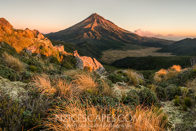 Sunset over Taranaki, Mt. Egmont and alpine vegetation, Egmont National Park, North Island, New Zealand, NZ