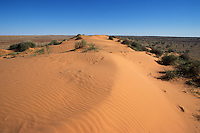 Sand dune near Birdsville outback Queensland, Australia.