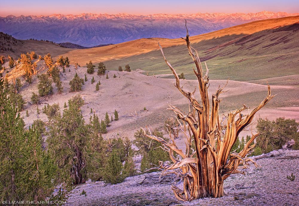 Sunrise on the Sierra Crest