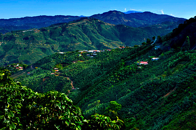 Costa Rica Tarrazu Valley
