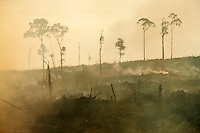 Palm oil plantations are rapidly expanding in Indonesia with severe environmental and social consequences.<br />
