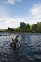 Mann hover regnbueørret ---- Man netting rainbow trout