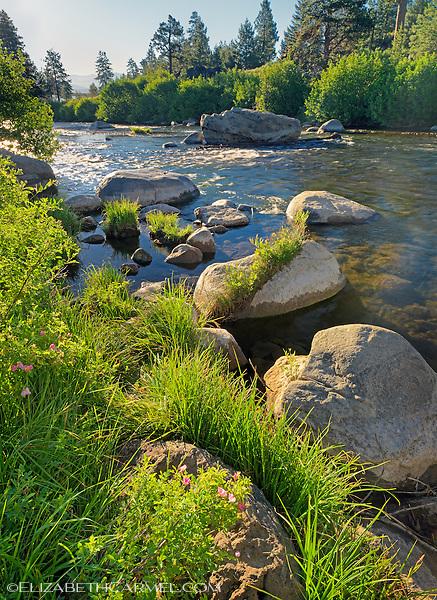 Truckee River in Summer
