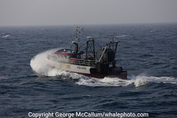 Scottish fishing trawler heading out into North sea from Peterhead  in gale force winds