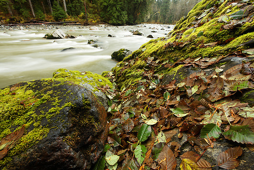 Autumn leaves on boulders, Stillaguamish River, Washington Cascade Mountains