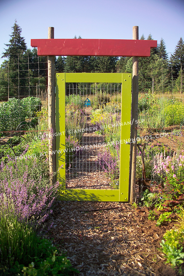 A chartreuse green painted gate and bright red lintel above dress up the entrance through this 8' wire mesh deer fence surrounding an organic kitchen garden (a modern day Victory Garden) of mixed vegetables and colorful flowering herbs on Vashon Island in Washington State's Puget Sound. Garden design by Stenn Design