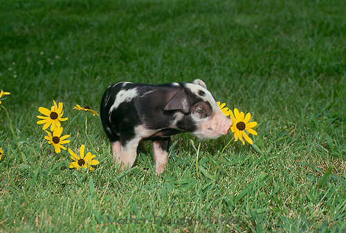 Smell the flowers-- Piglet advice,