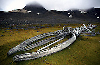 Images of the skeleton of a Hump back whale on a bay in Antarctica.<br />