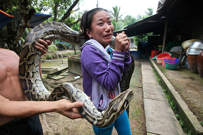 A woman shudders as a python is draped over her shoulders in the Mekong Delta near My Tho, Vietnam. Pythons are typically raised for their skins in the Mekong, but are also used to titillate tourists - and the occasional tour guide. Oct. 3, 2011.