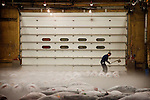 Tokyo, 1st of March 2010 - Tuna at Tsukiji wholesale fish market, biggest fish market in the world. 3:30 a.m, frozen tunas are cut with an axe in the auction area, in order to be scutinized before the auctions.