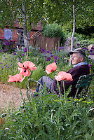 Old man Senior citizen elderly old man sitting in garden outside with flowers, trees, poppies, allium, house, rustic ornaments, cap, glasses