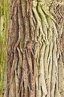 Tree trunk, Bialowieza forest, Poland