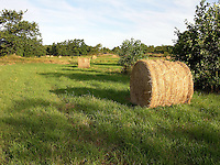 Haybales on a Farm on the Island of Kökar, Åland, Finland