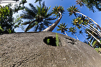 Looking up at some Yap stone money and the coconut palms against a bright blue sky, Yap Micronesia. (Photo by Matt Considine - Images of Asia Collection)