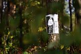 Trostenec in der Nähe von Minsk gilt als das größte Massenvernichtungslager in Belarus aus Zeiten der faschistischen Okkupation. Und doch beginnt die Tragödie von Trostenec schon früher: Ende der 1930er Jahre gehörte das Gelände zum sowjetischen NKWD, der dort auch Erschießungen durchführte. Diese schmerzliche Wahrheit über Trostenec ist in der belarussischen Gesellschaft bis heute hochumstritten und teilweise noch immer tabuisiert.  / Trostenec near Minsk used to be the biggest extermination camp during the times of fascist occupation. And yet the tragedy started earlier: end of the 1930ies the concetration camp was used by the Sovjetrussian NKWD as a place of execution. Yet this painful truth is still a taboo in the Belarusian society..