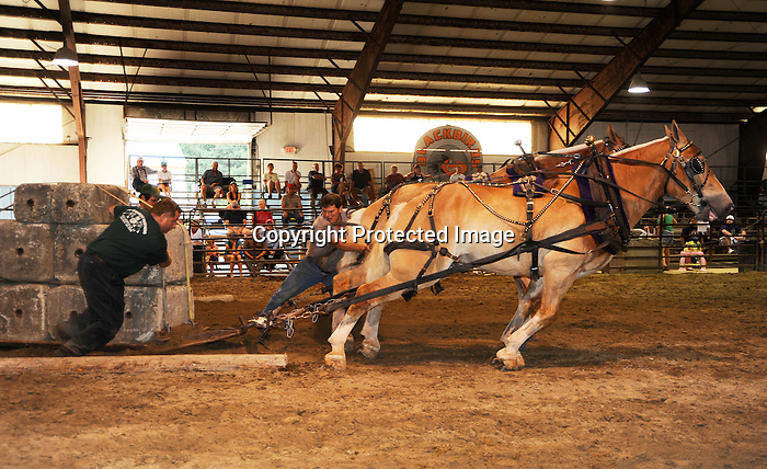 Draft horse pull in the arena at Cheshire Fair in Swanzey, New Hampshire USA