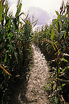 Autumn with muddy path through corn maze sunny afternoon Snohomish County City of Snohomish Washington State USA..