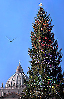 Christmas tree in St. Peter square at the Vatican.December 6, 2015.