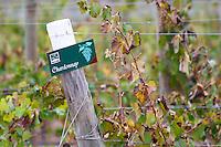 Vineyards. Chardonnay vines. Herdade da Malhadinha Nova, Alentejo, Portugal