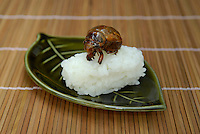 "Japanese cicada sushi. Tokyo resident Shoichi Uchiyama is the author of ""Fun Insect Cooking"". His blog on the topic gets 400 hits a day. He believes insects could one day be the solution to food shortages, and that rearing bugs at home could dispel food safety worries."
