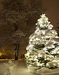 Idaho, North, Idaho Panhandle, Kootenai County, Coeur d'Alene. A beautiful lighted tree glows through a blanket of snow beside a snow covered sidewalk at night.