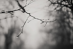 tree branches on a foggy winters morning with rain drops hanging off the end