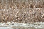 A winter day at Quivett Creek in Dennis, Cape Cod, MA, USA