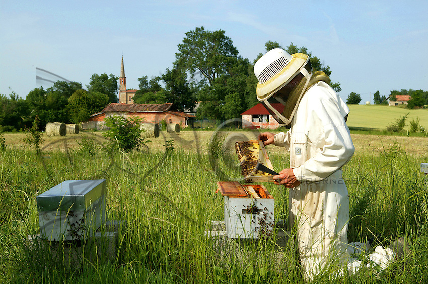 Standing before a queen-rearing hive, a Gersois beekeeper checks a frame. Rearing queens requires careful planning and constant care..