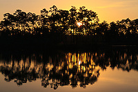 The morning sun rises behind an island of slash pines in the lake at Long Pine Key campground in Everglades National Park, Florida.