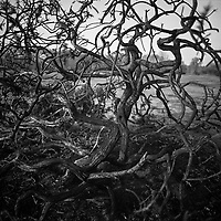 Abstract Branches, Suffolk 2009