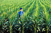 Farmer talks an a cell phone in a field of genitically modified corn.
