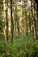 Forest of Kanha National Park, India